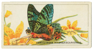 Many antique tobacco cards are lithographs
